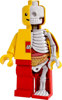 http://high-street.org/sidepic/leggo.skeleton.png