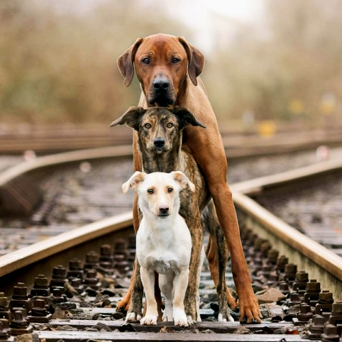 https://high-street.org/img/3.dogs.on.tracks.png