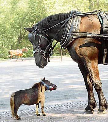 https://cruelery.com/img/horse-dwarf.jpg