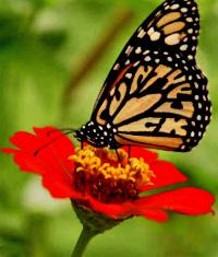 https://cruelery.com/sidepic/butterfly.jpg