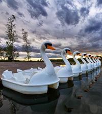 https://cruelery.com/sidepic/duckboats.jpg