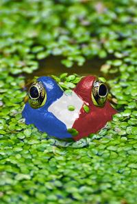 https://cruelery.com/sidepic/french.frog.jpg