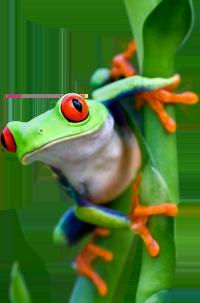 https://cruelery.com/sidepic/technicolortoad.png